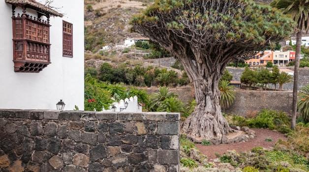 drachenbaum-teneriffa